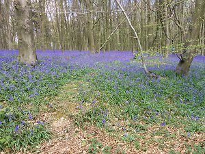 Contact Me. bluebells & woods
