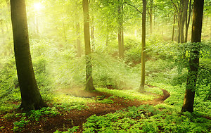 Why Have Counselling. path through woodland